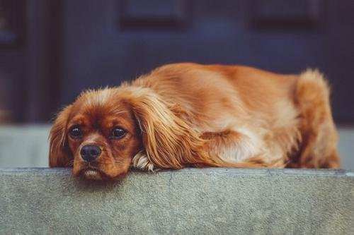 狗狗味道重怎么办?去除狗狗体味的方法